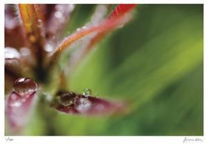 Botanical 3 by Florence Delva