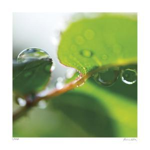 Dew Drops 1 by Florence Delva