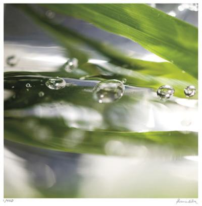 Dew Drops 3 by Florence Delva