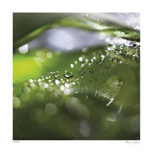 Dew Drops 5 by Florence Delva
