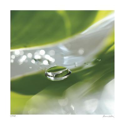 Dew Drops 7