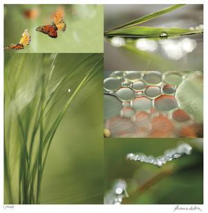 Fluttering Spring by Florence Delva