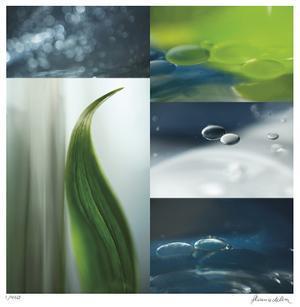 Ocean Grass by Florence Delva