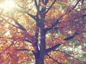 Autumnal Chorus by Florian Schleinig