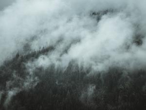 Forest Hidden by Florian Schleinig