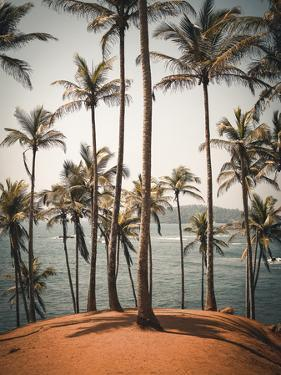 Palm Chorus by Florian Schleinig