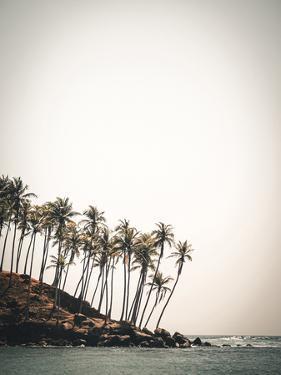 Palm Shores by Florian Schleinig