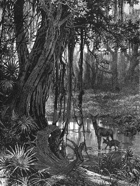 Florida Everglades, USA, C1885