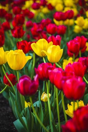https://imgc.allpostersimages.com/img/posters/flower-bright_u-L-Q1CABE10.jpg?artPerspective=n