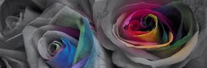 Flower Colors I