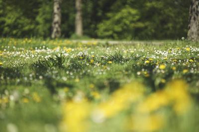 https://imgc.allpostersimages.com/img/posters/flower-meadow_u-L-Q1EXU8C0.jpg?artPerspective=n