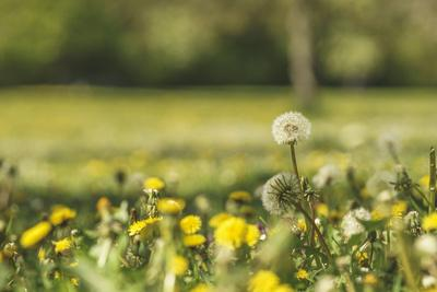 https://imgc.allpostersimages.com/img/posters/flower-meadow_u-L-Q1EXUR30.jpg?artPerspective=n