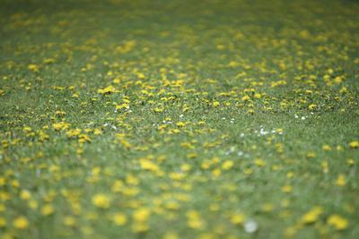 https://imgc.allpostersimages.com/img/posters/flower-meadow_u-L-Q1EXWGU0.jpg?artPerspective=n