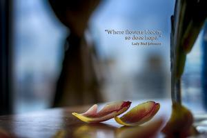 Flower petals on a counter top with Lady Bird Johnson Quote