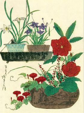Flower Pots and Basket