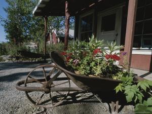 Flowers Bloom in an Old Wheelbarrow