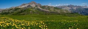 Flowers in a Field, Hinterland, French Riviera, Provence-Alpes-Cote D'Azur, France