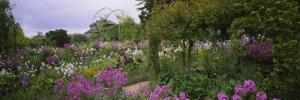 Flowers in a Garden, Foundation Claude Monet, Giverny, France