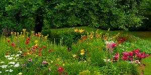 Flowers in a garden, Knowlton, Quebec, Canada