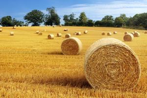 Hay Bail Harvesting in Golden Field Landscape by Flynt