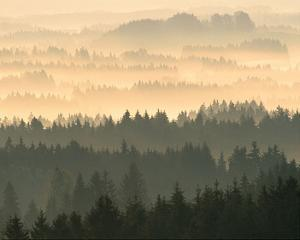 Fog Raising From Forest Dusk
