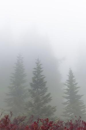 https://imgc.allpostersimages.com/img/posters/foggy-forest_u-L-Q1CAP5Z0.jpg?artPerspective=n