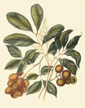 Foliage, Flowers & Fruit I