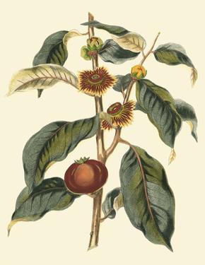Foliage, Flowers & Fruit II