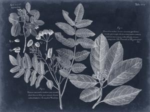 Foliage on Navy V