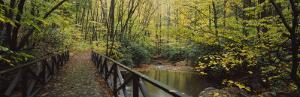 Footbridge Over a Pond in a Forest, Cucumber Run, Ohiopyle State Park, Pennsylvania, USA