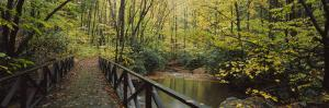 Footbridge Over a Pond in a Forest, Cucumber Run, Ohiopyle State Park, Pennsylvania, USA