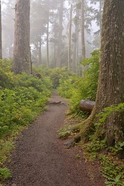 Footpath in foggy forest along Oregon Coast, Oregon, USA