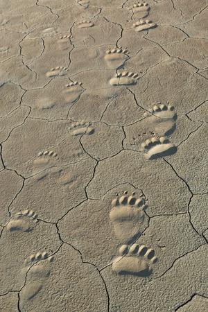 https://imgc.allpostersimages.com/img/posters/footprints-of-and-cub-coastal-grizzly-bears-in-lake-clark-national-park-alaska_u-L-Q1CZS2G0.jpg?p=0