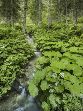 https://imgc.allpostersimages.com/img/posters/forest-at-krimml-gerlos-pass-pinzgau-salzburg-austria_u-L-Q11YZ0G0.jpg?p=0