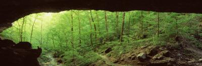 Forest, Cobb Cave, Lost Valley, Ozarks, Arkansas, USA