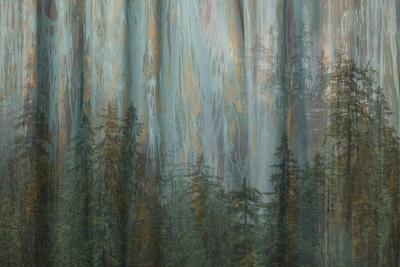 https://imgc.allpostersimages.com/img/posters/forest-i_u-L-Q1HA32H0.jpg?artPerspective=n