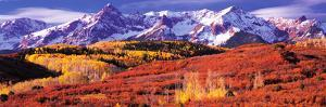 Forest in Autumn with Snow Covered Mountains in the Background, Telluride, San Miguel County, Co...
