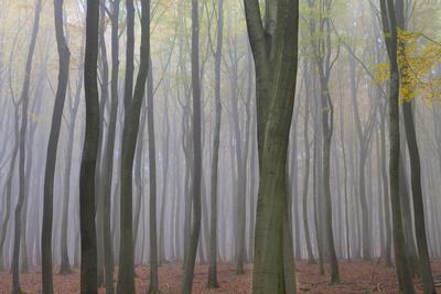 https://imgc.allpostersimages.com/img/posters/forest-in-fog-near-frankfurt-germany-europe_u-L-PWFFUV0.jpg?p=0
