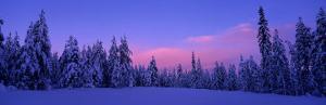 Forest in Winter, Dalarna, Sweden