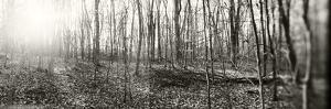 Forest, Pocono Mountains, Pennsylvania, USA