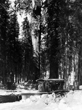 Forest Snow Plough