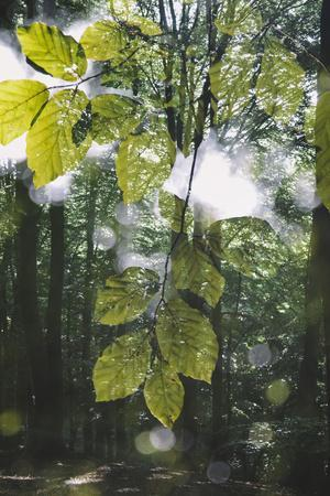 https://imgc.allpostersimages.com/img/posters/forest-spring-double-exposure_u-L-Q1EXOGD0.jpg?artPerspective=n