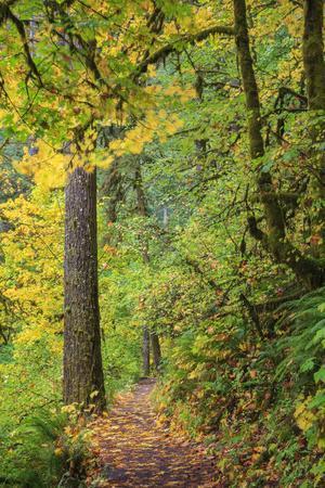https://imgc.allpostersimages.com/img/posters/forest-trail-silver-falls-state-park-oregon-usa_u-L-PN6U0T0.jpg?artPerspective=n