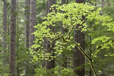 https://imgc.allpostersimages.com/img/posters/forest-trees-columbia-river-gorge-oregon-usa_u-L-PN6MNY0.jpg?p=0