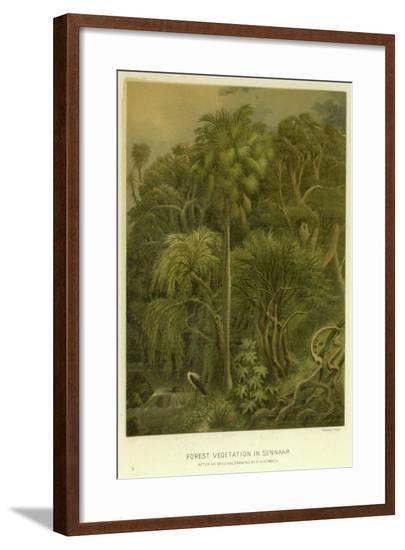 Forest Vegetation in Sennaar--Framed Giclee Print