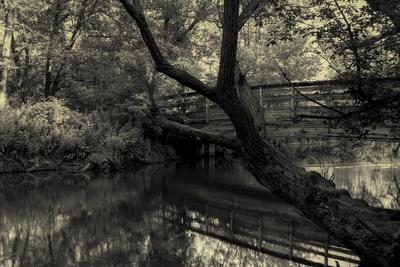 https://imgc.allpostersimages.com/img/posters/forest-with-wooden-bridge-over-brook_u-L-Q1CQIQL0.jpg?artPerspective=n