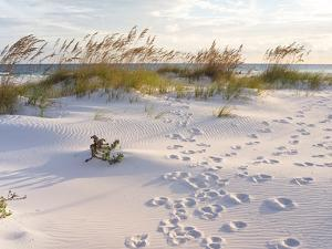Footprints in the Sand at Sunset in the Dunes of Pensacola Beach, Florida. by forestpath