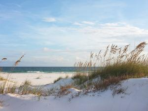 Sand Dunes and Ocean at Sunset, Pensacola, Florida. by forestpath