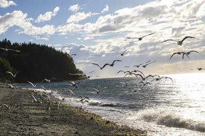 https://imgc.allpostersimages.com/img/posters/fort-worden-state-park-post-townsend-washington-state-flock-of-seagulls-on-the-coast-beach_u-L-Q1H24UN0.jpg?artPerspective=n