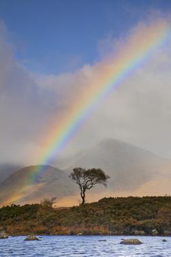 United Kingdom, Uk , Scotland, Highlands, Rannoch Moor by Fortunato Gatto